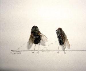 fly-art